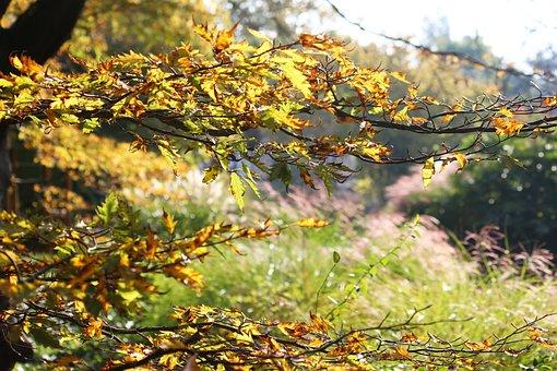 Plant, Light, Nature, Flower, Bright, Flora, Garden