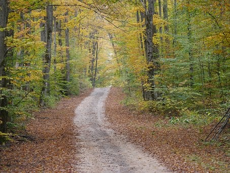 Nature, Fall, Fall Foilage, Autumn, Leaves, Forest
