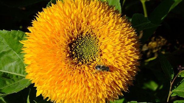 Sunflower, Nature, Summer, Flower, Bloom, Mood, Flora