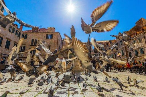 Pigeons, Pigeon, Dubrovnik, Sun, Sky, Old City, Birds