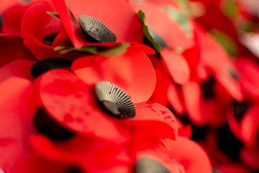 Poppies, Poppy, Plastic Poppy, Remembrance, War