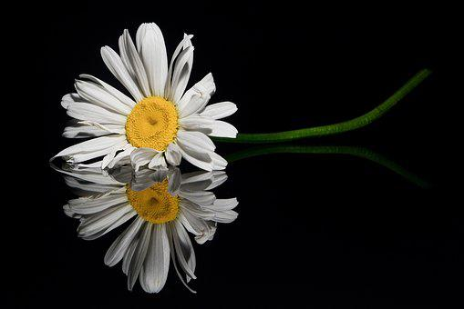 Flower, Reflection, Close Up, Flowers, Decoration