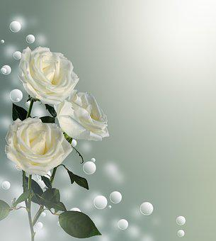 Rose, Bouquet, Postcard, Background, Congratulation