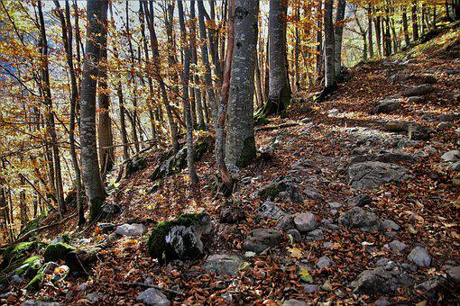 The Path, Land, Autumn, Forest, Collapse, Steeply