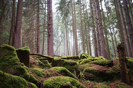 Stones, Moss, Forest, Fog, Green, Rock, Light, Hell