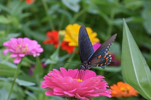 Dahlia, Flower, Butterfly, Bloom, Petals, Summer, Pink