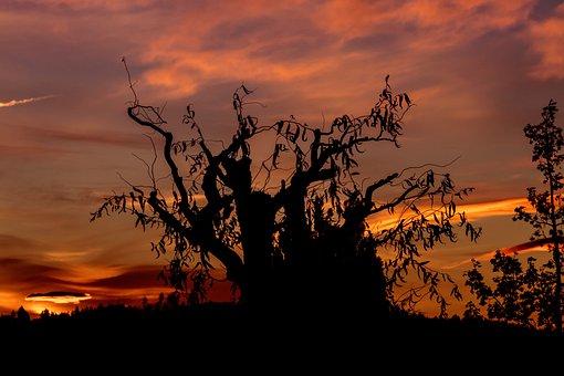 Sunrise, Sky, Mood, Sun, Clouds, Tree, Nature, Color