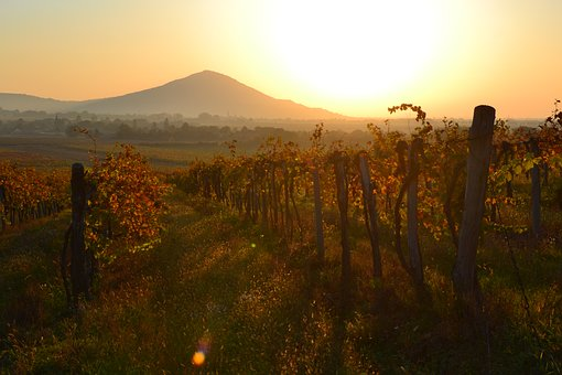 Dawn, Szársomlyó, Baranya, Grape, Mountain, Red, Orange
