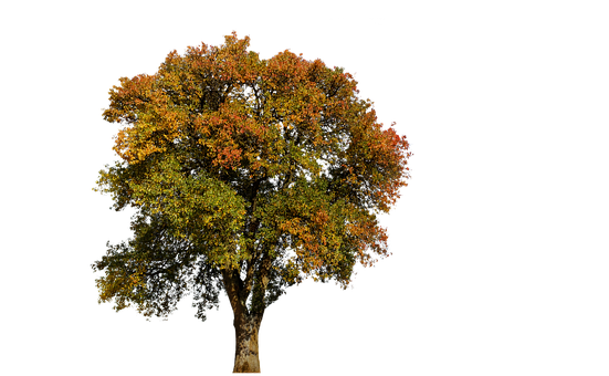 Tree, Autumn, Leaves, Aesthetic, Colorful, Tribe