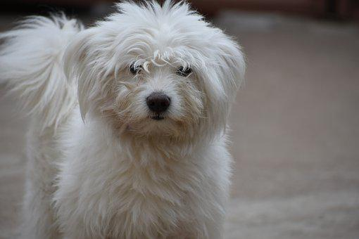 Dog, Cute, Won, White, Canine, Adorable, Face, Young