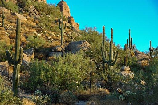 Cactus, Rocks, Vegetation, Arid, Desert, Scottsdale