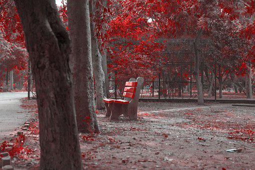 Autumn, Red Leaves, Colorful, Fall, Tree, Bench, Nature