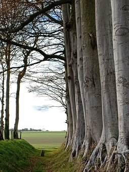 Trees, Autumn, Landscape, Normandy