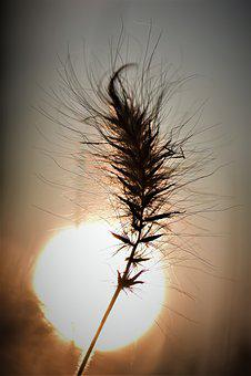 Grasses, Blade Of Grass, Grass, Plant, Nature, Meadow