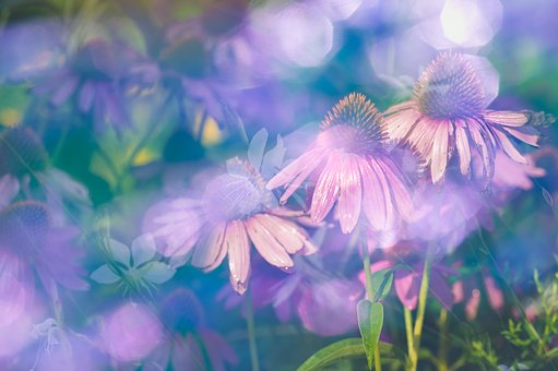 Blossoms, Flowers, Nature, Flower, Summer, Pink, Plant