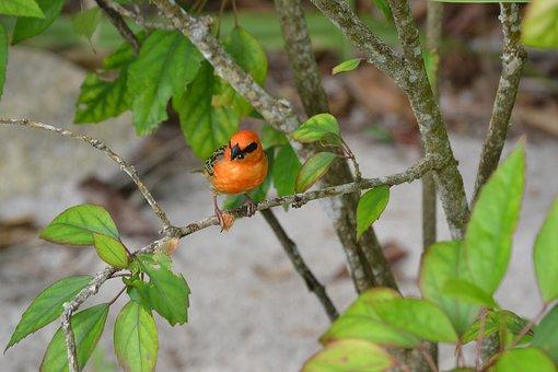 Seychelles, Bird, Bright, Orange, Tropical