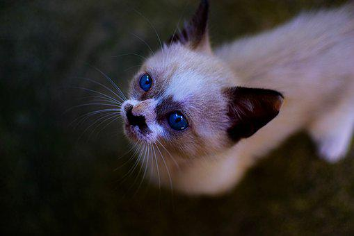 Cat, Kitten, Animals, Cute, Feline, Pet, Pets, Adorable