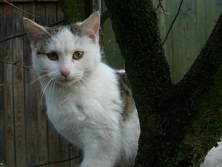 Cat, Tree, Animal, Kitten