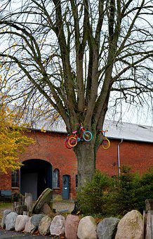 Tree, Bicycles, Child's Bike, Farm