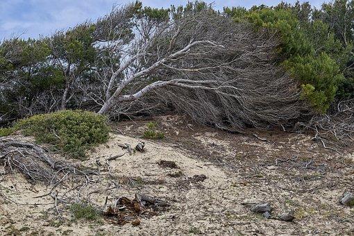 Tree, Landscape, Coast, Nature, Wind