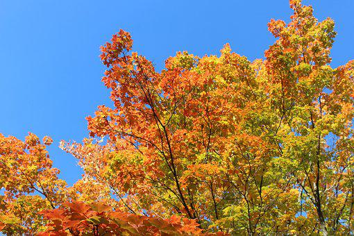 Fall, Colors, Red, Orange, Yellow, Trees, Nature, Maple