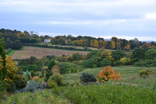 Cheshire, Autumn, Fall, Leaves, Countryside, Vista