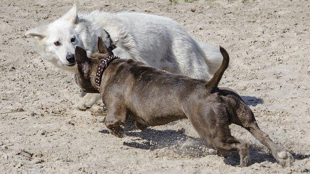 Dogs, Action, Play, Lol, Pet, Jump, Dog, Fun