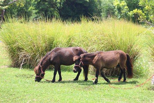 Farm, Horses, Horse, Animals, Nature, Countryside