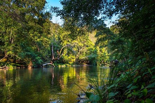 Rainforest, River, Water, Nature, Flow, Jungle