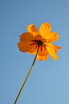 Flower, Sky, Nature, Summer