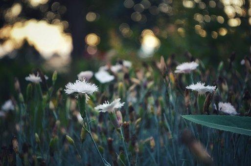 Flowers, Flower Bed, Bokeh, Macro, Nature, Bloom