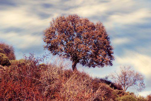 Tree, Autumn, Forest, Colorful, Red, Atmospheric