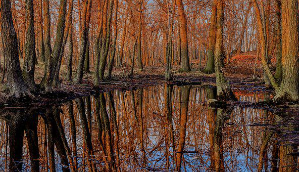 Forest, Sunset, Lake, Trees, Reflections, Nature