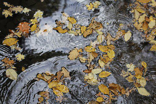 Water, Leaves, Nature, Forest, Autumn, Landscape