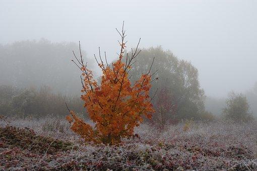 Sunrise, Mist, Autumn Leaves, Frost, Nature, Landscape