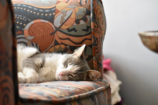 Cat, Kitty, Feline, Adorable, Sleepy, Fur, Kittens, Pet
