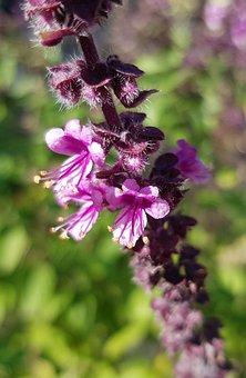 Herbs, Plant, Garden, Eat, Bio, Healthy, Green, Nature