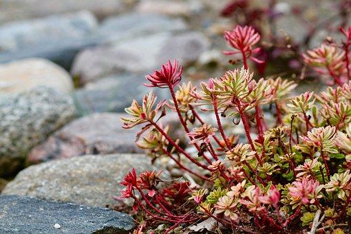 Botanical, Garden, Nature, Plant, Growth, Color, Flora