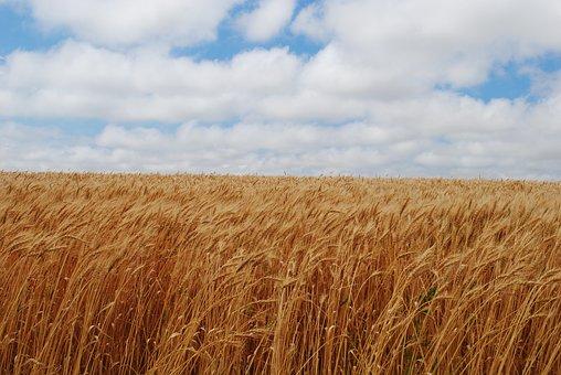 Field, Fall, Harvest, Rural, Seasonal