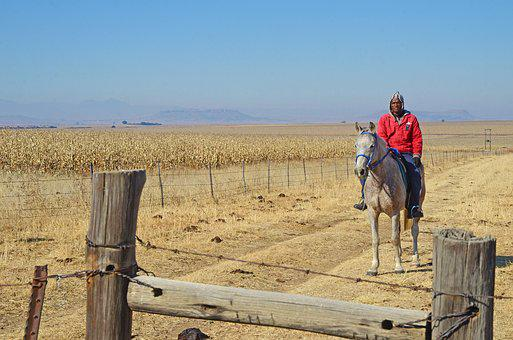 South Africa, Horse, Rider, Farm, Maize, Countryside