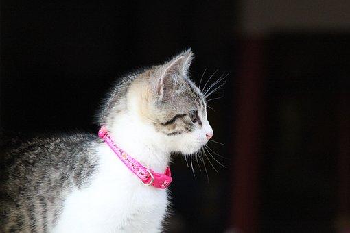 Kitten, Cat, Animal, Pet, Feline
