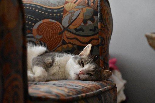 Cute Cat, Sleepy, Kitty, Sweet, Pet, Feline, Kitten
