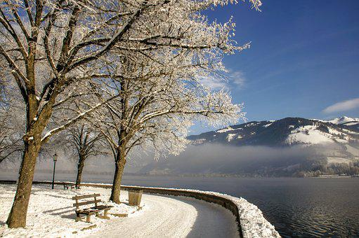 Winter, Trees, Lake, Nature, Cold, Wintry, Snowy, Frost
