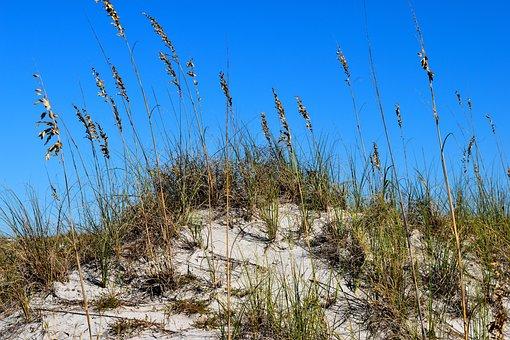 Sea Oats, Sand Dune, Beach, Nature, Landscape, Dunes