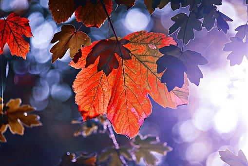 Leaf, Foliage, Tree, Autumn, Forest, Colorful