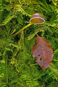 Mushroom, Moss, Small Mushroom, Leaf, Leaves, Forest