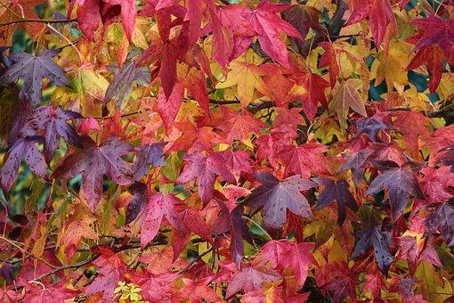 Autumn, Fall Foliage, Colorful, Colored, Leaves, Nature