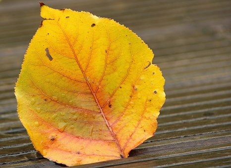 Leaves, Autumn, Water Drop, Rain, Wet, Moisture, Mood