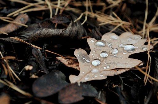 Sheet, Rosa, Macro, Autumn, Leaves, Forest