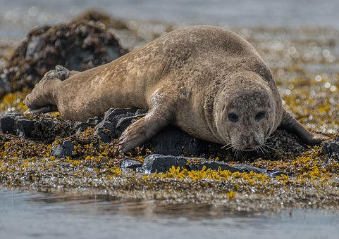 Seal, Baby, Animal, Nature, Wildlife, Outdoor